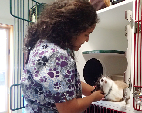 Caring for a cat in the cat boarding area