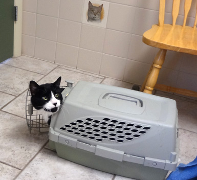 Cat emerging from carrier